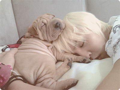 Big Bang G-Dragon's Dog